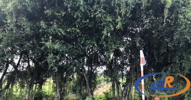ông anh ngộp quá Bán 3000m2 đất mặt tiền quốc lộ 54 đoạn gần chợ Bông Súng xã Định Hòa huyện Lai Vu